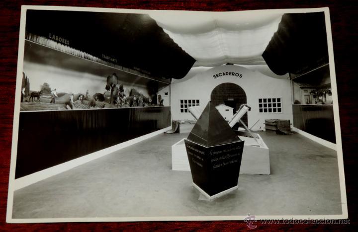 Coleccionismo: 22 FOTOGRAFIAS DE LA 1ª EXPOSICION NACIONAL DEL CULTIVO DEL TABACO, AÑO 1935, PALACIO DEL RETIRO, MA - Foto 5 - 51117782
