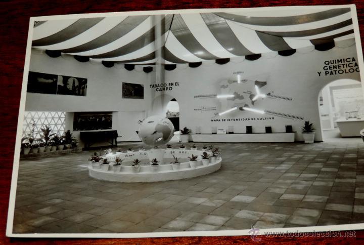 Coleccionismo: 22 FOTOGRAFIAS DE LA 1ª EXPOSICION NACIONAL DEL CULTIVO DEL TABACO, AÑO 1935, PALACIO DEL RETIRO, MA - Foto 11 - 51117782