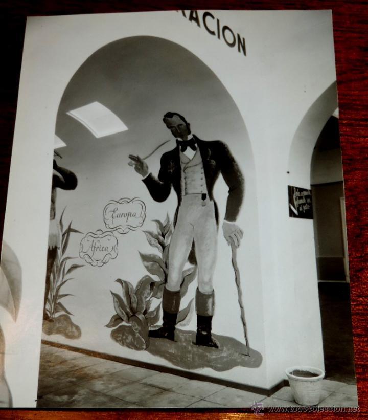 Coleccionismo: 22 FOTOGRAFIAS DE LA 1ª EXPOSICION NACIONAL DEL CULTIVO DEL TABACO, AÑO 1935, PALACIO DEL RETIRO, MA - Foto 20 - 51117782