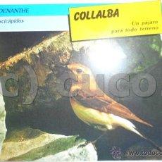 Coleccionismo: TARJETA, FICHA, ANIMALES, REINO, ANIMAL, AVES,80,COLLALBA,SARPE. Lote 43460706