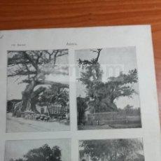 Coleccionismo: LAMINA -- ARBOL DE GUERNICA , LA PAZ DE CUBA , ETC. --AÑO 1912- (REF BD) 24.5 X 15,5 CM. Lote 56189684
