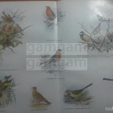 Coleccionismo: PAJAROS ANIMALES BIOLOGIA - LAMINA DE DICCIONARIO ANTIGUO --AÑO 1912- (REF BF) 24.5 X 32,5 CM. Lote 56239158