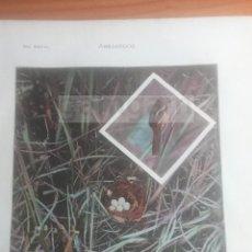 Coleccionismo: ABEJARUCO ANIMALES BIOLOGIA - LAMINA DE DICCIONARIO ANTIGUO --AÑO 1912- (REF BF) 24.5 X 15,5 CM. Lote 56239310