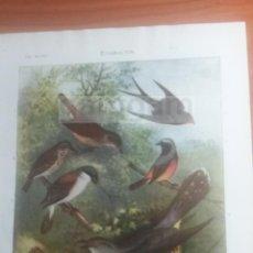 Coleccionismo: AVES EMIGRACION ANIMALES BIOLOGIA -LAMINA DE DICCIONARIO ANTIGUO --AÑO 1912- (REF BF) 24.5 X 15,5 CM. Lote 56239429