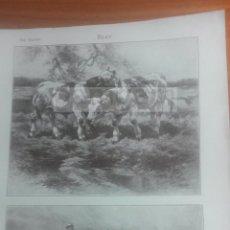 Coleccionismo: BUEY ANIMALES BIOLOGIA - LAMINA DE DICCIONARIO ANTIGUO --AÑO 1912- (REF BF) 24.5 X 15,5 CM. Lote 56239529