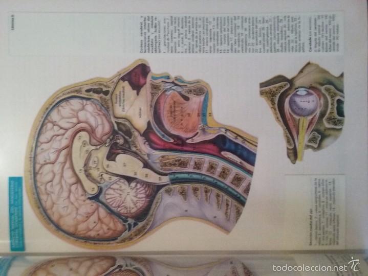 transvision-unidad didáctica-anatomia - cabeza - Comprar en ...