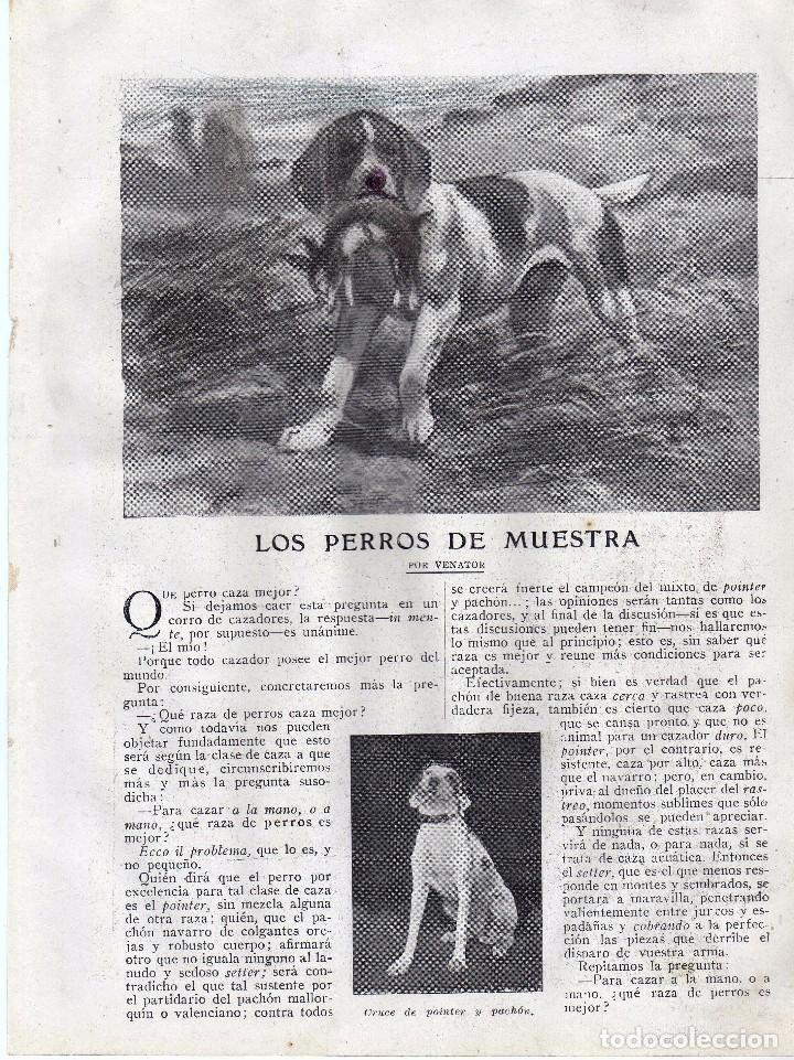 RECORTE PRENSA DE 1919-LOS PERROS DE MUESTRA (Coleccionismo - Laminas, Programas y Otros Documentos)
