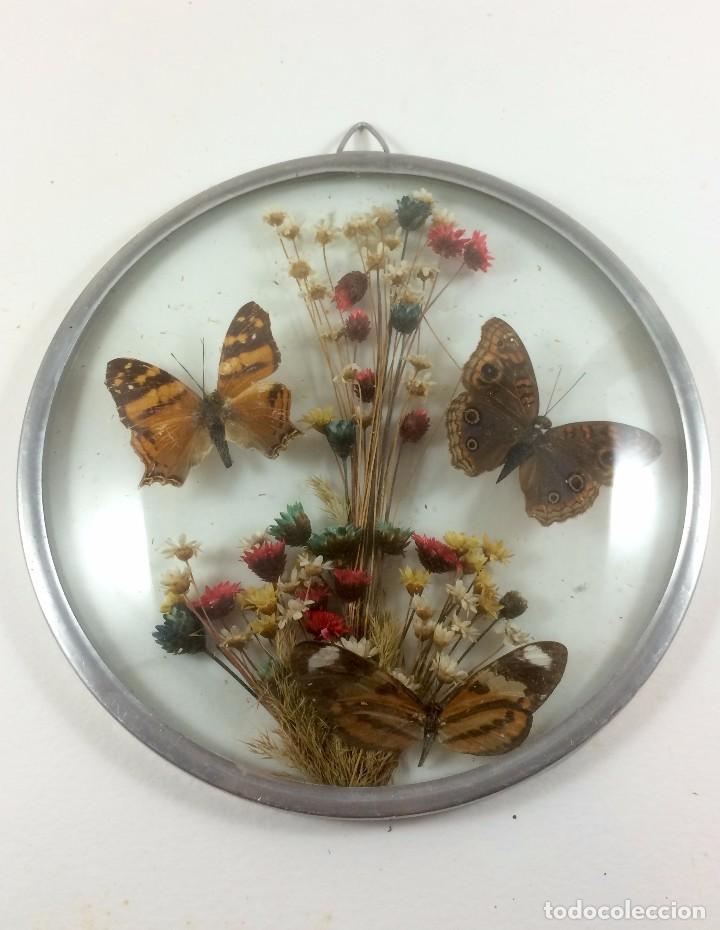cuadro de 3 mariposas disecadas y flores secas. - Comprar en ...