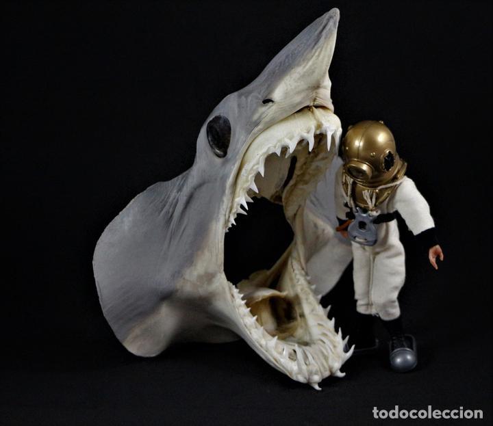 Mako shark head 220-230mm tiburon jaws taxider - Sold