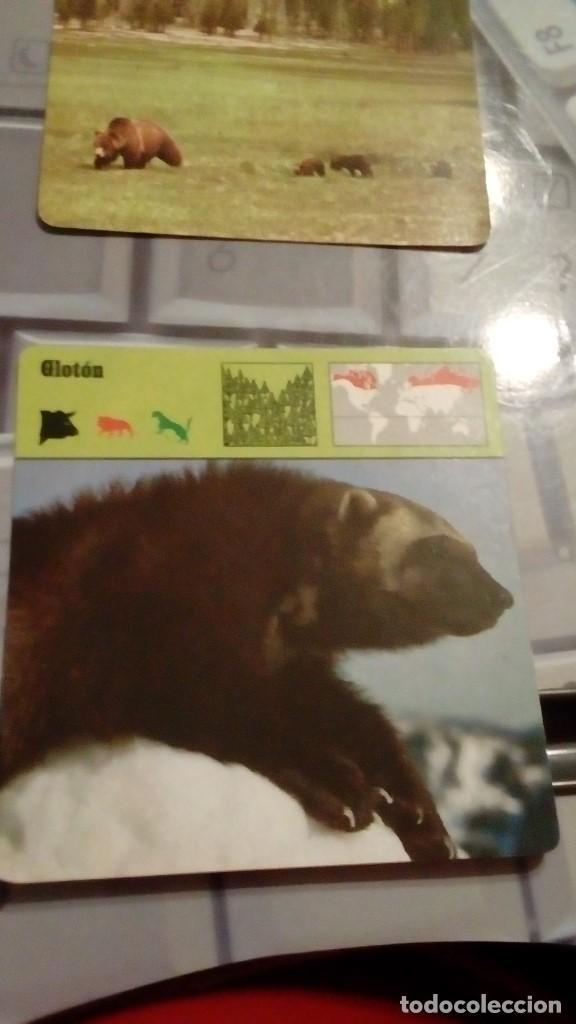 FICHA COLECCIONABLE DE ANIMALES S.A.P.E. EDICION RENCONTRE GLOTON (Coleccionismo - Laminas, Programas y Otros Documentos)