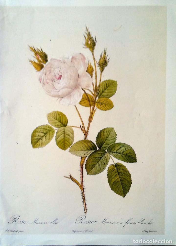 Lamina para enmarcar rosas comprar documentos antiguos for Enmarcar fotos online