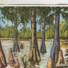 Coleccionismo: CROMOS: HISTORIA NATURAL NUMERO 385. Lote 95715436