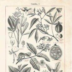 Coleccionismo: LAMINA ESPASA 2985: CAUCHO. Lote 95717040