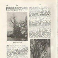 Coleccionismo: LAMINA SALVAT 80277: ARBOL DE LA NOCHE TRISTE Y ARBOL DE LAS CANDELAS. Lote 95851400