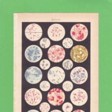 Colecionismo: LAMINA BACTERIAS. ESPASA - CALPE (1957). Lote 98983347