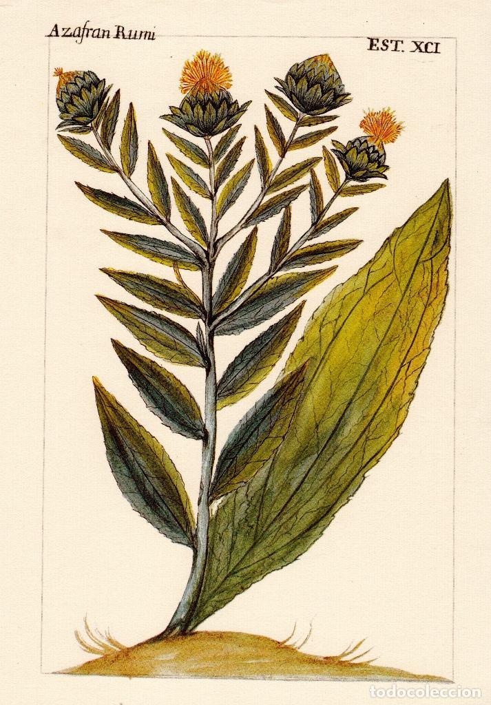 16 decorativas y bonitas laminas de botánica en - Comprar Documentos ...