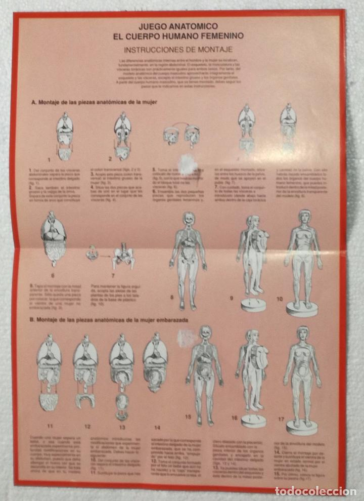 esquema doble de montaje de los esqueletos de l - Comprar Documentos ...