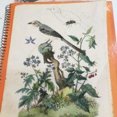 Coleccionismo: LAMINA SIGLO XIX. Lote 109039831
