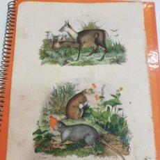 Coleccionismo: LÁMINA SIGLO XIX. Lote 109040303
