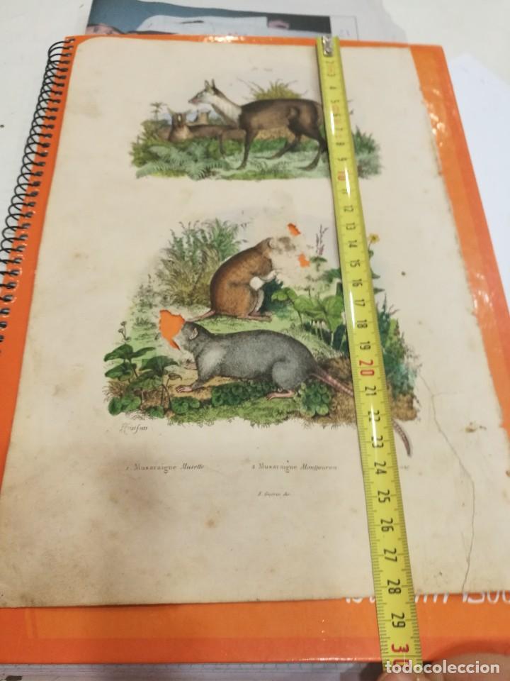 Coleccionismo: Lámina siglo XIX - Foto 2 - 109040303