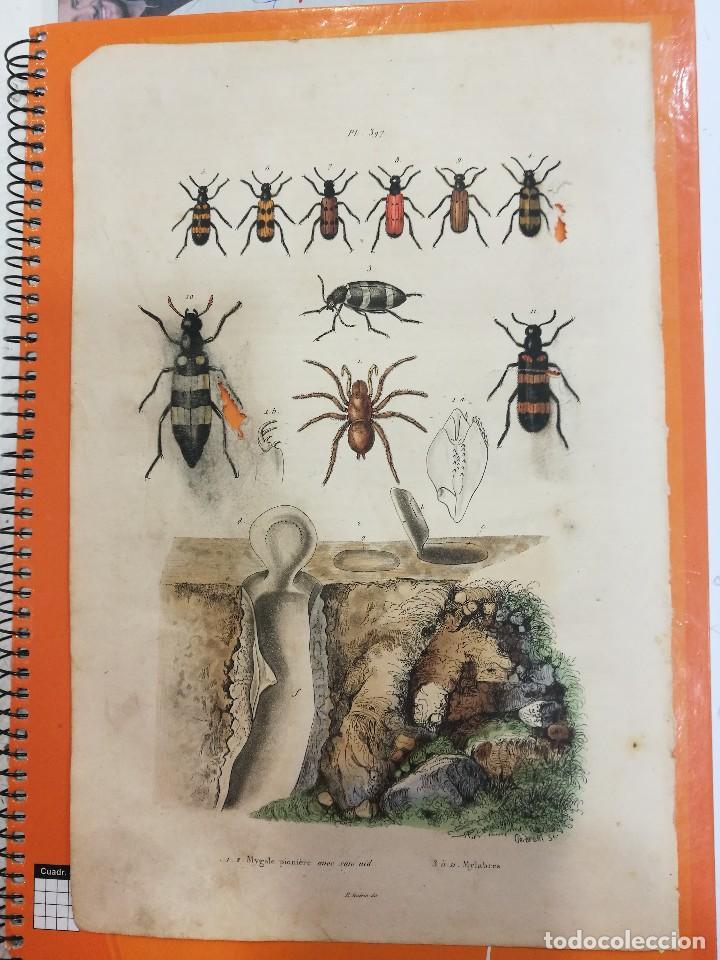 LAMINA SIGLO XIX (Coleccionismo - Laminas, Programas y Otros Documentos)