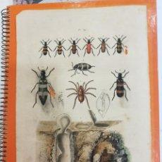 Coleccionismo: LAMINA SIGLO XIX. Lote 109040891