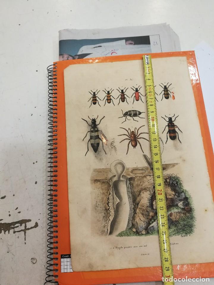 Coleccionismo: Lamina siglo XIX - Foto 2 - 109040891