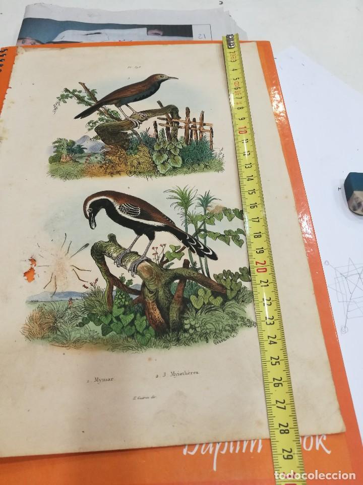 Coleccionismo: Lámina siglo XIX - Foto 2 - 109041255
