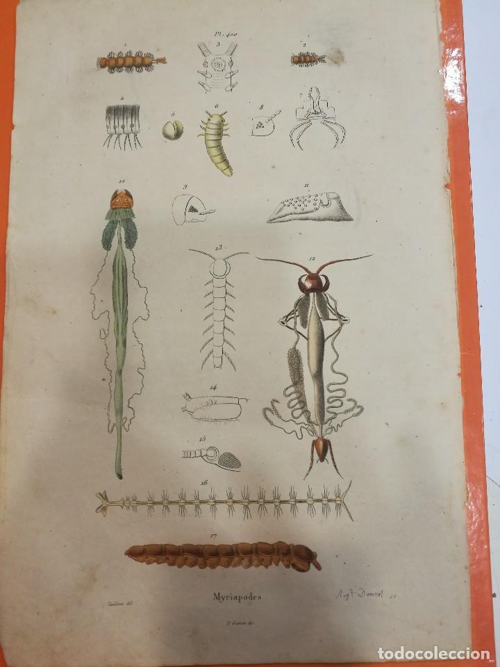 LÁMINA SIGLO XIX (Coleccionismo - Laminas, Programas y Otros Documentos)