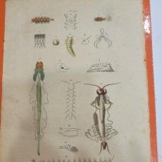 Coleccionismo: LÁMINA SIGLO XIX. Lote 109041815