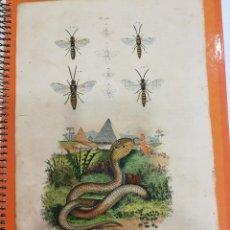 Coleccionismo: LAMINA SIGLO XIX. Lote 109069483