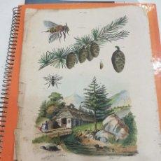 Coleccionismo: LÁMINA SIGLO XIX. Lote 109077291