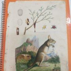 Coleccionismo: LAMINA SIGLO XIX. Lote 109077571