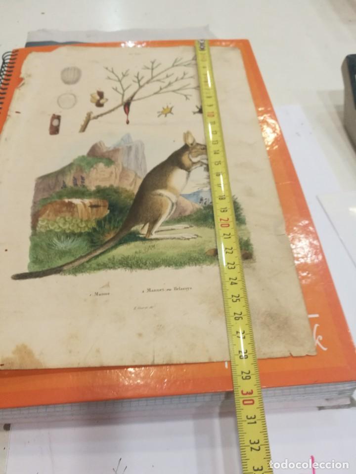Coleccionismo: Lamina siglo XIX - Foto 2 - 109077571