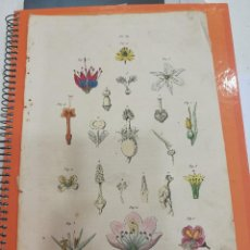 Coleccionismo: LAMINA SIGLO XIX. Lote 109077999