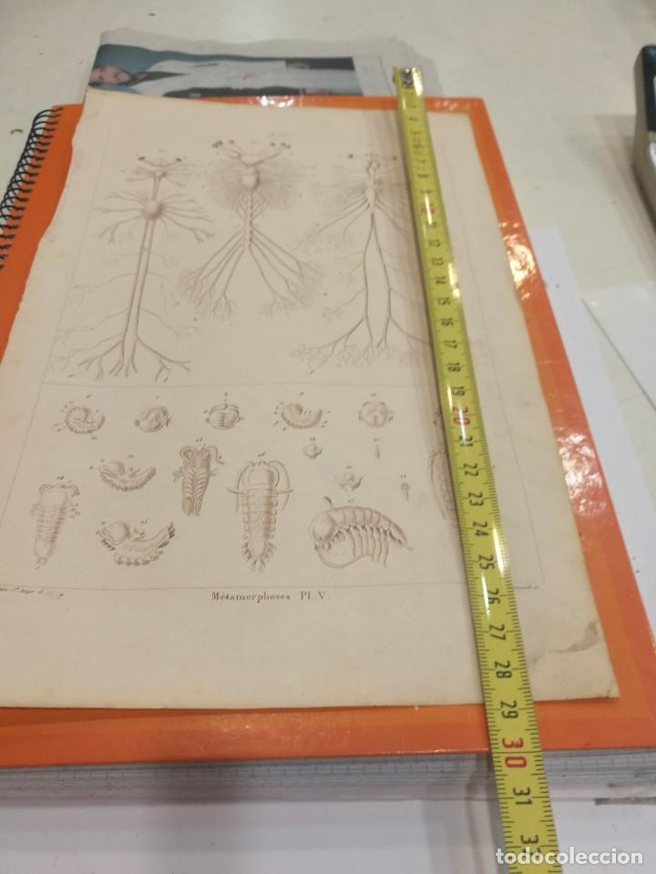 Coleccionismo: Lámina siglo XIX - Foto 2 - 109081267