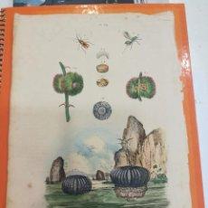 Coleccionismo: LÁMINA SIGLO XIX. Lote 109081435