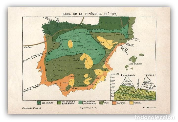 Mapa Flora Peninsula Iberica Vegetacion Aprovec Sold Through