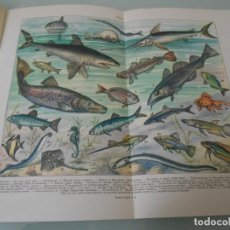 Coleccionismo: PECES .- LÁMINA ESPASA Z-530. Lote 119904491