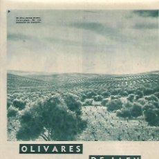 Coleccionismo: AÑO 1958 RECORTE PRENSA OLIVARES DE JAEN RECOLECCION DE LA ACEITUNA COSECHA. Lote 125859363