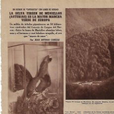 Coleccionismo: AÑO 1955 RECORTE PRENSA LA SELVA VIRGEN DE MUNIELLOS ASTURIAS TRONCOS GIGANTES ROBLE ARBOL. Lote 154042414