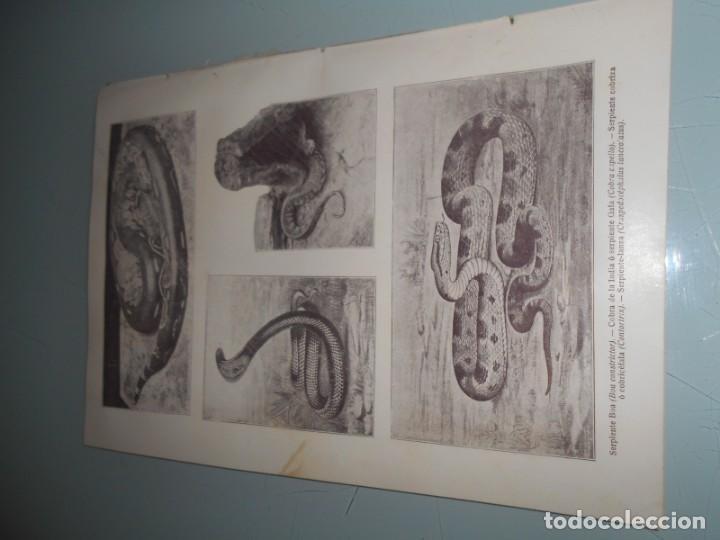 Coleccionismo: LÁMINA SALVAT .- 17 FOTOS DE SERPIENTES DOBLE LÁMINA EN ANVERSO Y REVERSO - Foto 3 - 155335442
