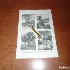 Coleccionismo: ANTIGUA LÁMINA 1908: ARBOL. DE GUERNICA. DE LA PAZ (CUBA) DE LA NOCHE TRISTE. COLÓN AMARRÓ CARABELAS. Lote 163799322