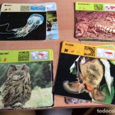 Coleccionismo: SAFARI CLUB FICHAS DE ANIMALES . Lote 169074120