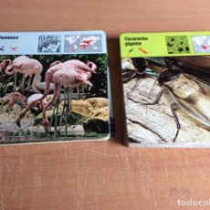 Coleccionismo: FICHAS SAFARI CLUB #108 FICHAS DE ANIMALES. Lote 169078364