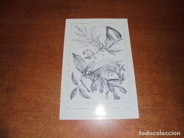 Coleccionismo: ANTIGUA LÁMINA: ARCE I Y II - Foto 2 - 171639823