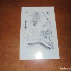 Coleccionismo: ANTIGUA LÁMINA: ARCE I Y II. Lote 171639823