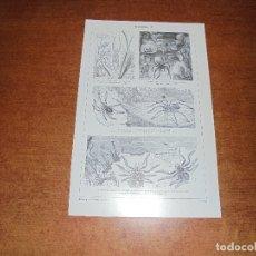 Coleccionismo: ANTIGUA LÁMINA: ARÁCNIDOS I Y II. Lote 171640000