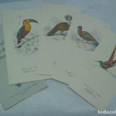 Coleccionismo: COLECCION DE BONITAS LAMINAS CON DIBUJO A COLOR DE PAJAROS: EL PINCEL DE LA NATURALEZA. AÑOS 50. Lote 173443465