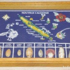 Coleccionismo: RECUERDO DE NUEVA CALEDONIA AÑO 1990 CON CONCHAS AUTENTICAS DE LA ISLA NOUVELLE CALEDONIE. Lote 176216253
